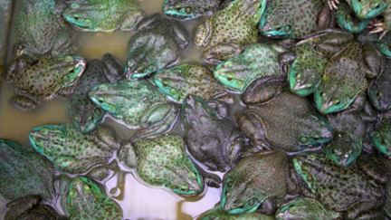 Frog Soup for the Soul